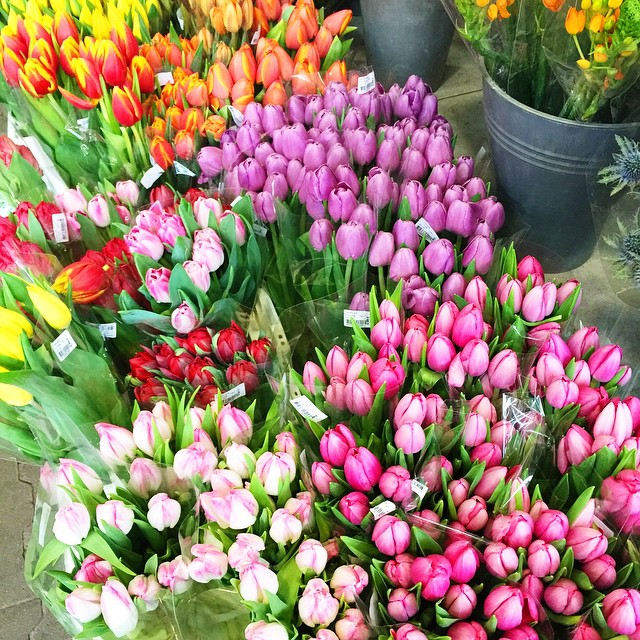 flowers-tulips-spring-summer